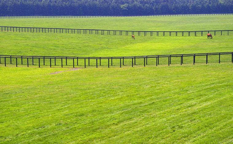 元競走馬と触れ合える「ノーザンホースパーク」3