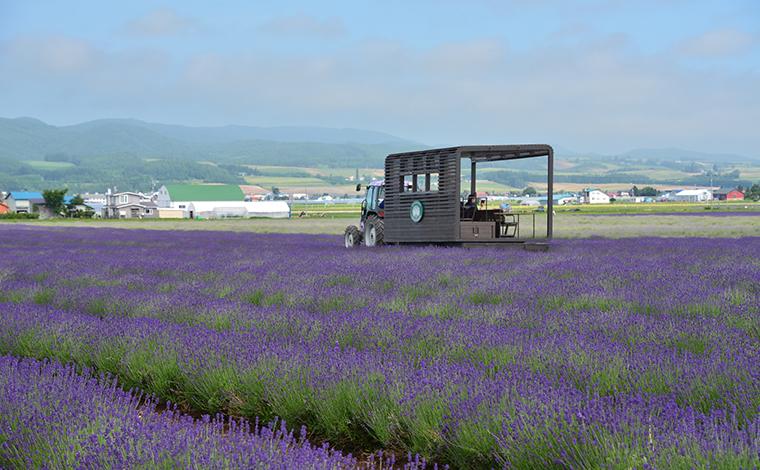 北海道を代表するラベンダー畑「ファーム富田」1