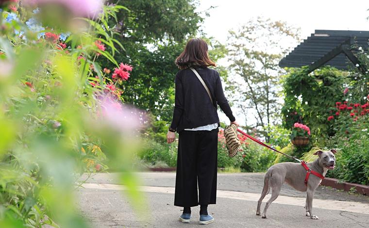 行ってきました、愛犬と一緒に夏の北海道ドライブ!2
