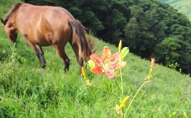 その1:絶滅危惧種の花も多数。豊かな自然を体感できる都井岬(串間市)3