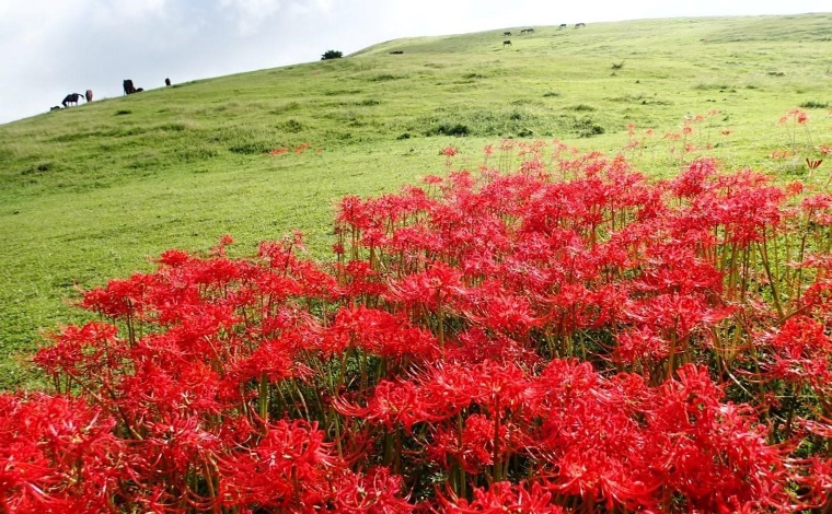 その1:絶滅危惧種の花も多数。豊かな自然を体感できる都井岬(串間市)4