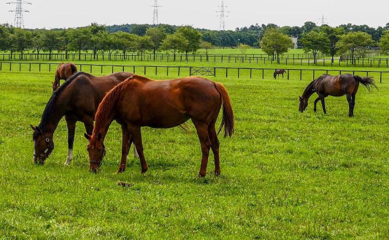 大自然の中で馬と遊ぼう!1