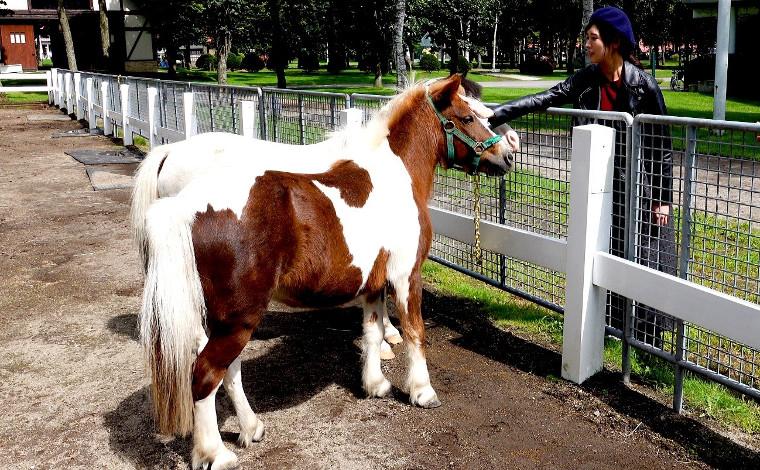 大自然の中で馬と遊ぼう!2