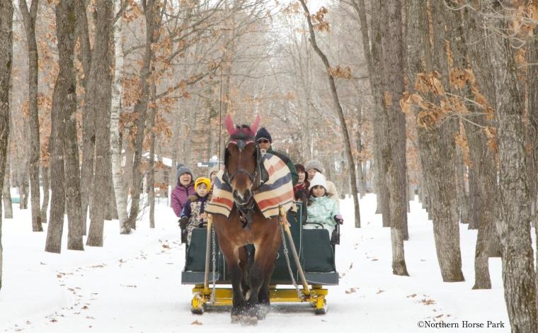 大自然の中で馬と遊ぼう!4