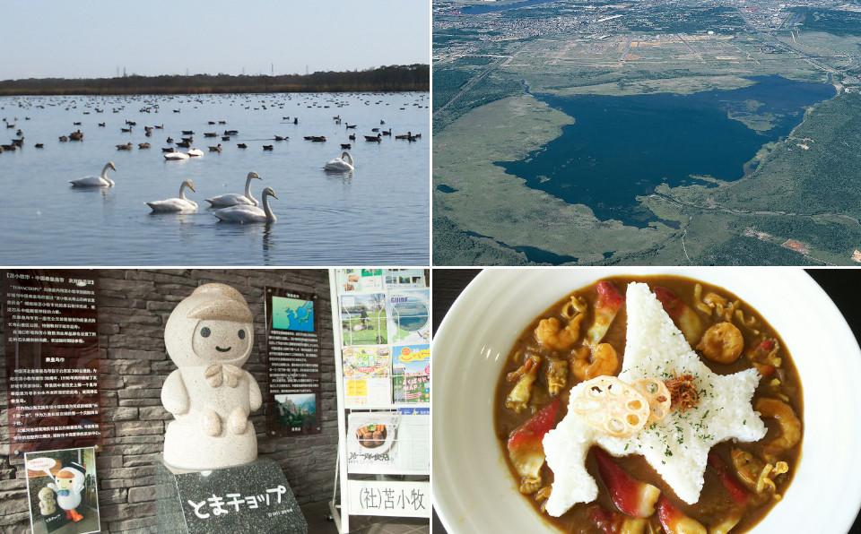 苫小牧に来たら、ハクチョウの湖「ウトナイ湖」へ。乗船券で特典あり!